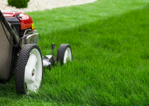 Impress everyone with your expressive lawn