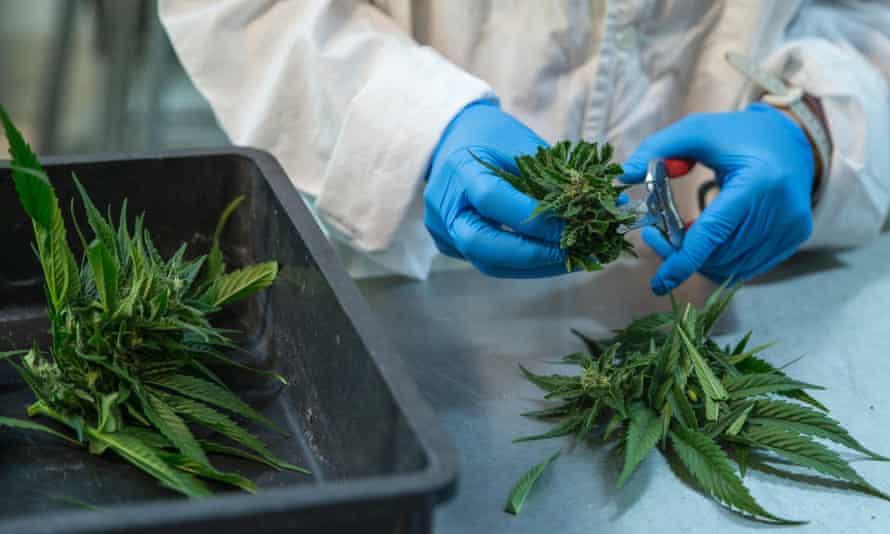 The usefulness of hemp flower